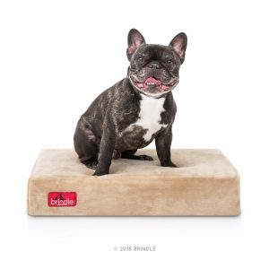 Brindle 4 Inch Solid Memory Foam Orthopedic Dog Bed with Removable Waterproof Velour Cover