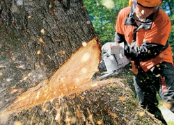 Top 10 Chainsaw Reviews — Best Models Worth Buying in 2019