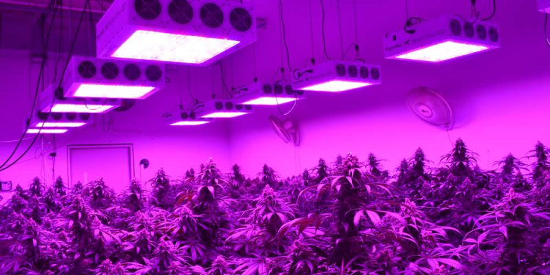 10 Essential LED Grow Light Reviews – Our Honest and Unbiased Thoughts (2019)