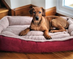 Top 7 Best Serta Dog Bed Reviews — Get Your Perfect Match